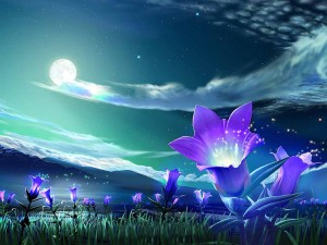 flower_under_night_sky_wallpaper-normal